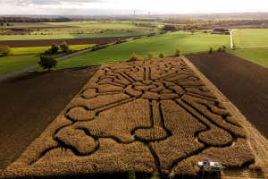 A farmer in Germany drives his combine harvester in a cornfield with a labyrinth in the shape of a coronavirus particle