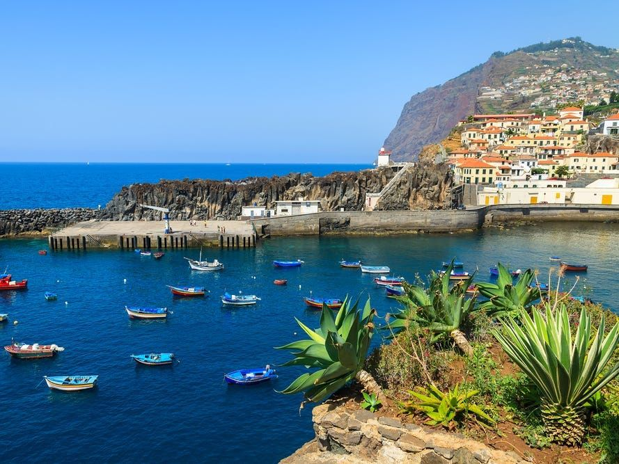 Colorful fishing boats on sea water in Camara de Lobos port with agave plants in foreground, Madeira island