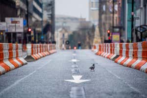 A pigeon on an empty Deansgate in Manchester, UK