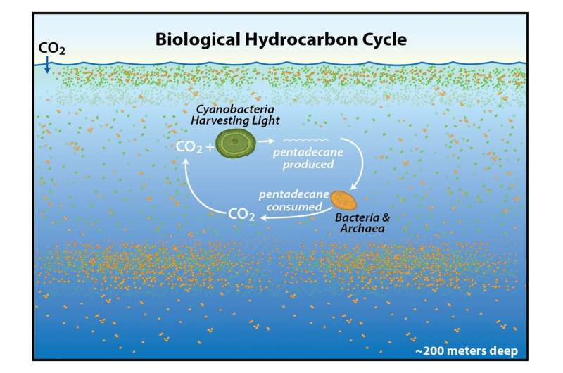Earth's natural hydrocarbon cycle. (David Valentine/UCSB)